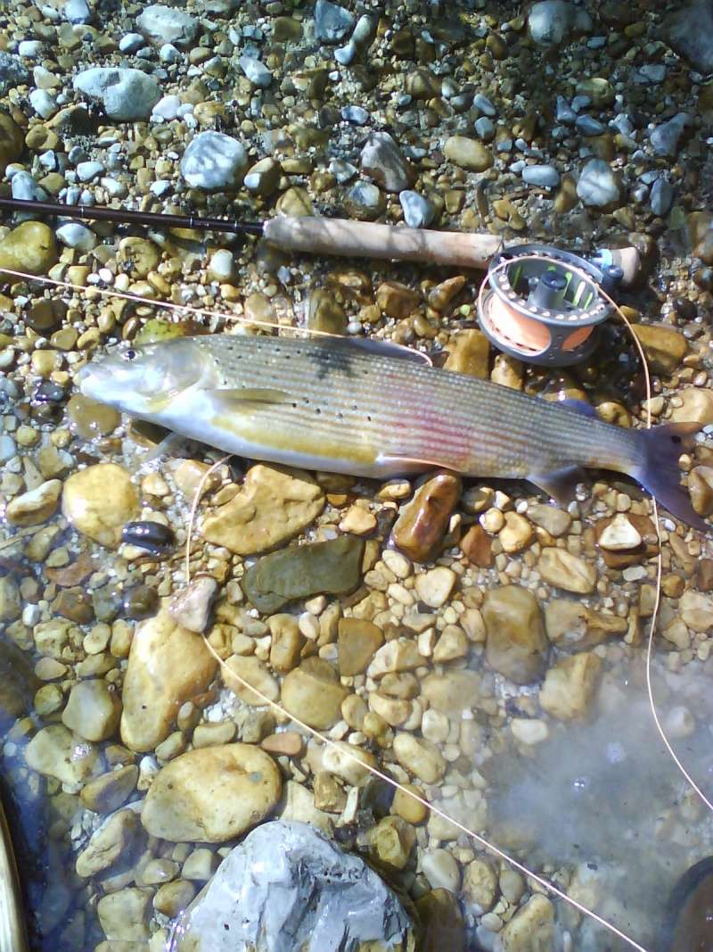 Trofei di pesca - Pagina 2 Dsc00112
