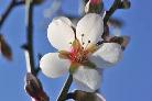 Lexique sur la prière Fleur_11