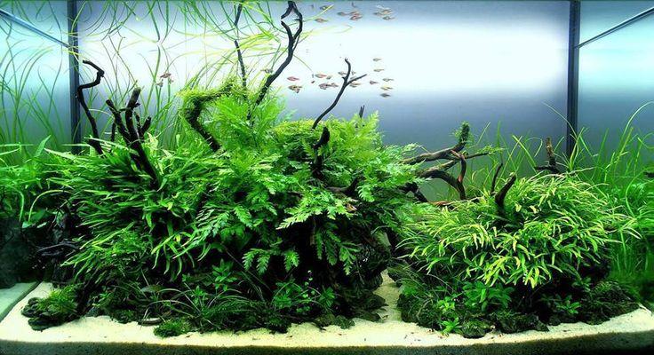 Lancement d'un bac 300l Aquascaping [Nowis06] - Page 4 7ff45510