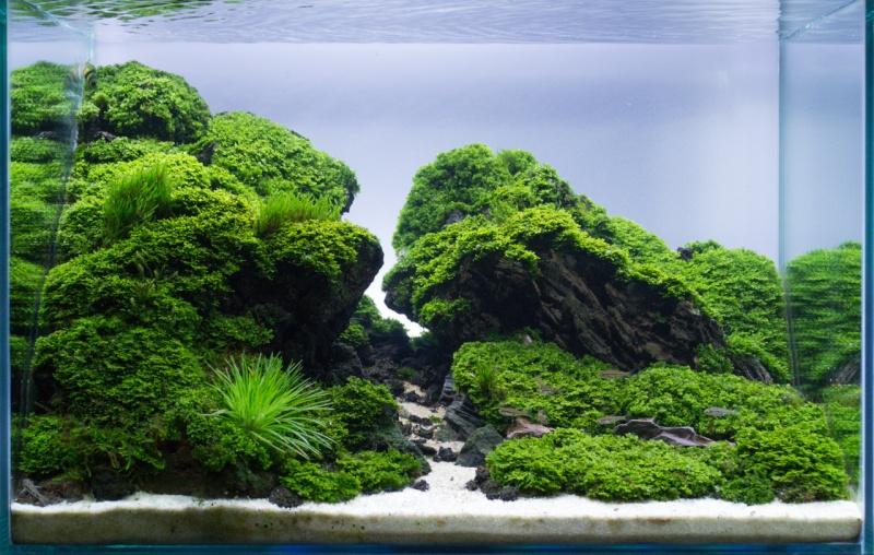 Lancement d'un bac 300l Aquascaping [Nowis06] - Page 4 Tumblr11