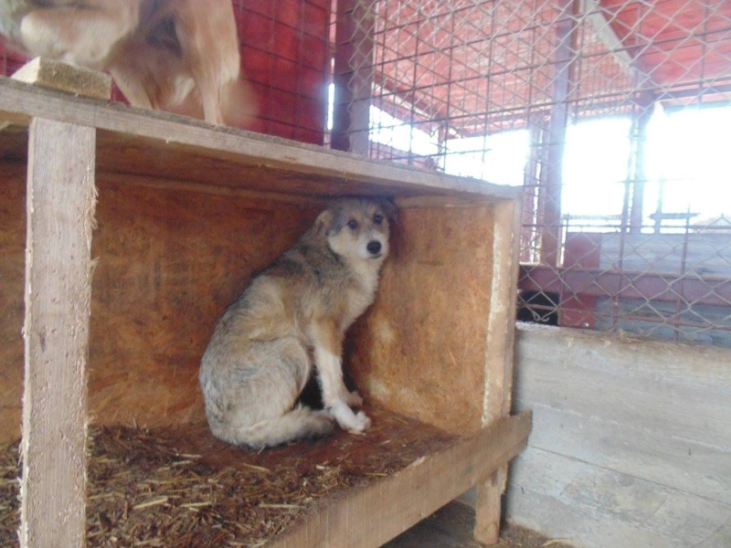 VANILLE, née 2013, 15 kgs (ORASTIE/FOURRIERE) - Prise en charge Refuge d'Arthaz (départ74) Nanou10