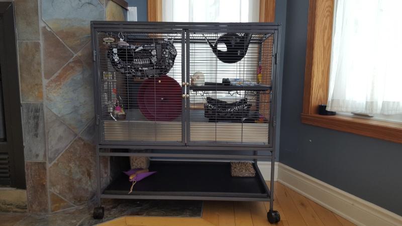 La cage Critter Nation de mes rattes . 20160316