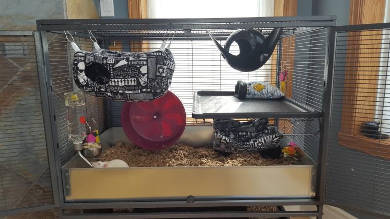 La cage Critter Nation de mes rattes . 20160322