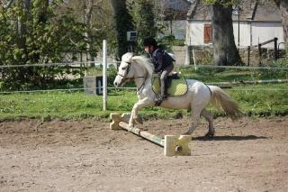 Estimation de nos chevaux ! - Page 3 Img_9311