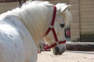 Estimation de nos chevaux ! - Page 3 Img_9511