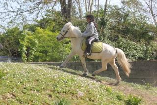 Estimation de nos chevaux ! - Page 3 Img_9512