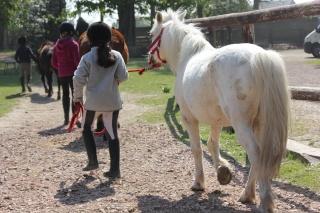 Estimation de nos chevaux ! - Page 3 Img_9514