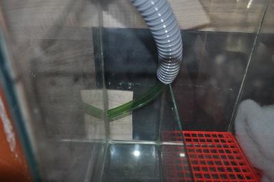 Lancement Aquarium 270 Litres avec filtration externe - Page 3 Dsc_4114