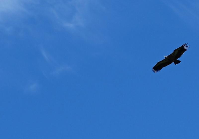 the sky is blue Dscf5010