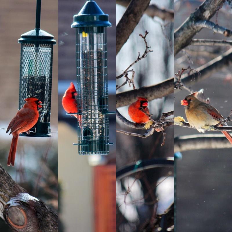 Cardinal Buster 😉 Image17