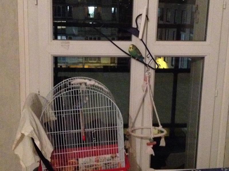 Perruches qui dorment à l'extérieur de leur cage Img_4210