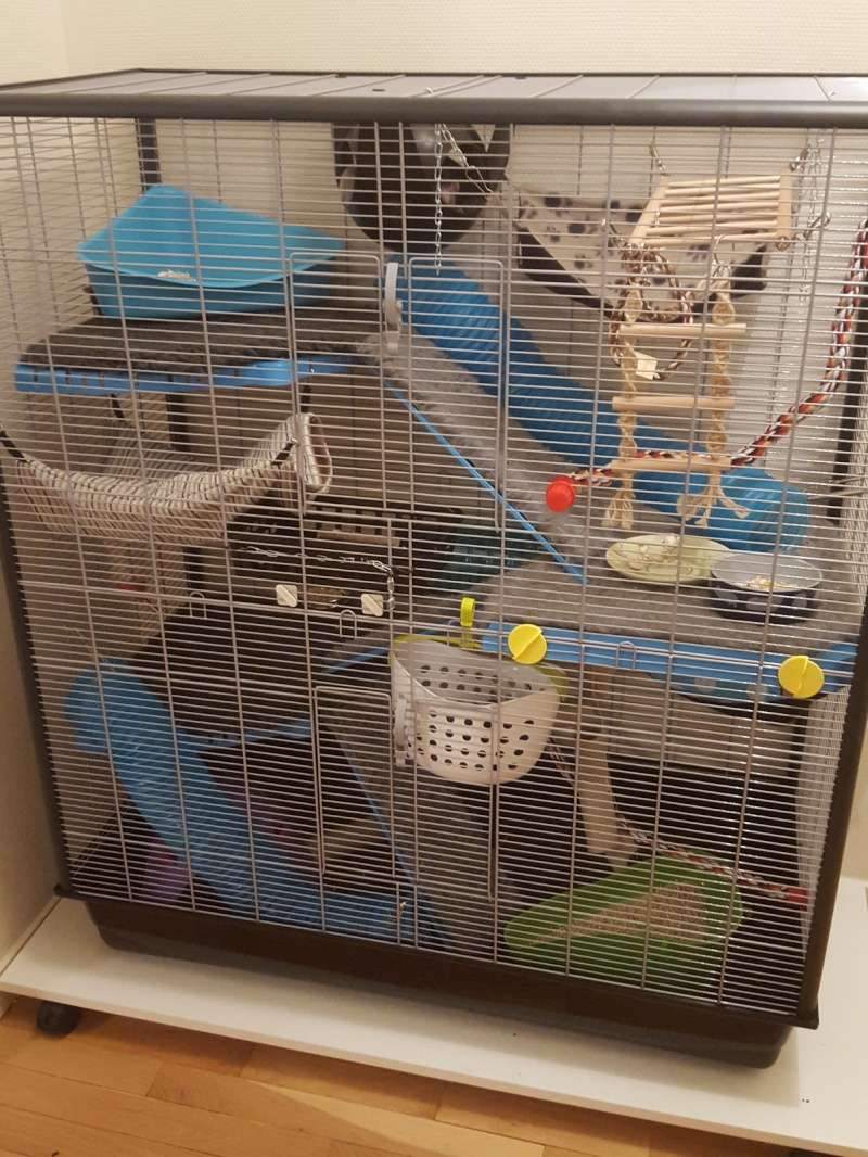 Aménager une cage pour 3 rats en bonne santé et 1 rat un peu handicapé - Page 2 20160232