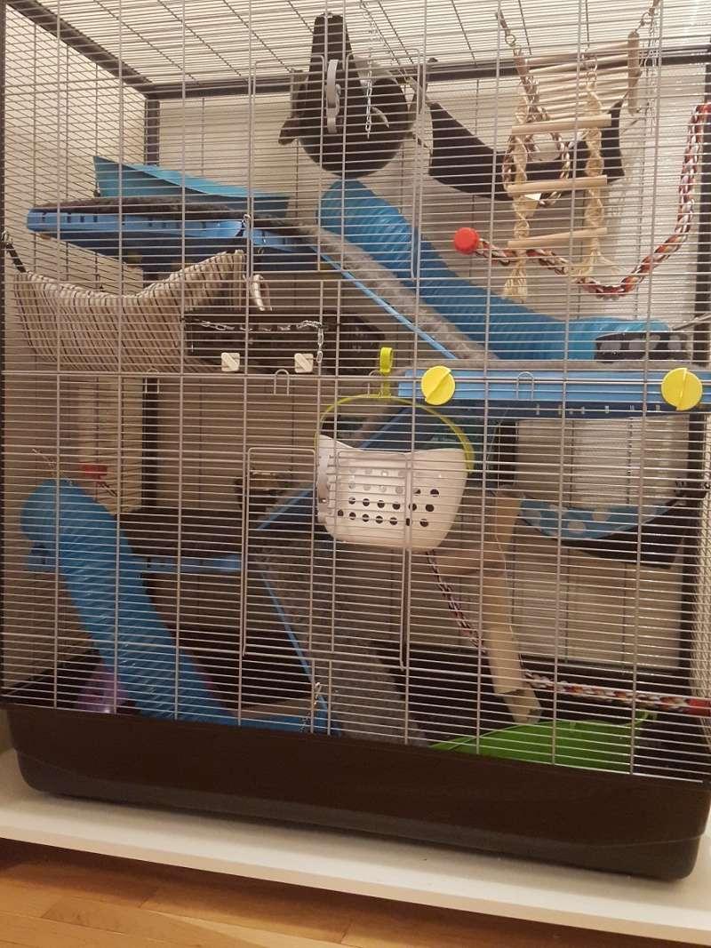 Aménager une cage pour 3 rats en bonne santé et 1 rat un peu handicapé - Page 2 20160233