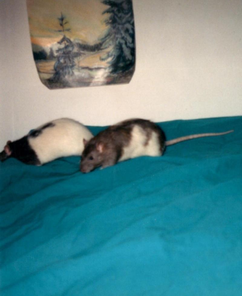 Les ratons dans le vent (la Mollusquerie) - Page 3 Kenned11