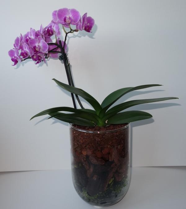 Orchideen in Glasvasen 4 (SGK) - Seite 24 Sgk_ph10