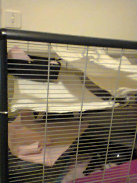 Photos de vos cages - Page 6 Cage_e10