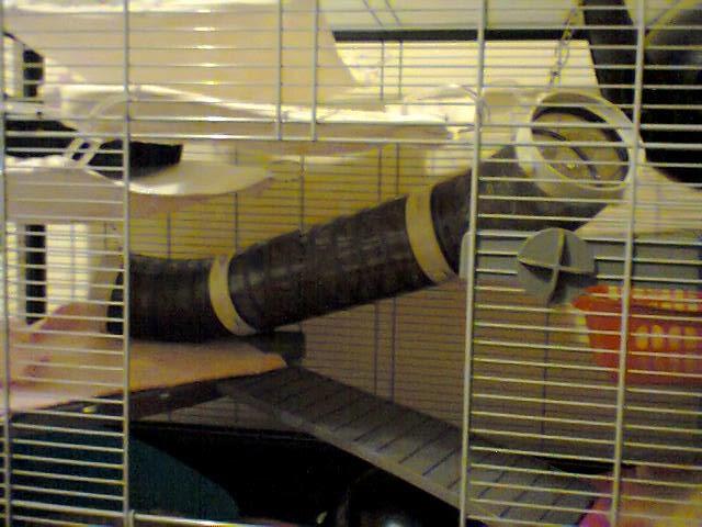 Photos de vos cages - Page 6 Cage_t12