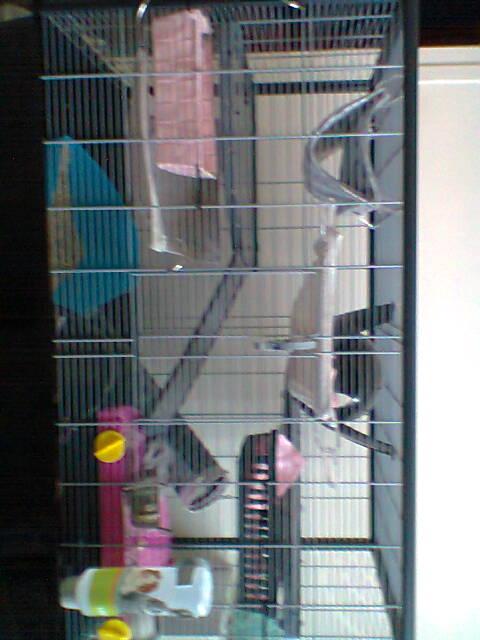 Photos de vos cages - Page 6 Photo015