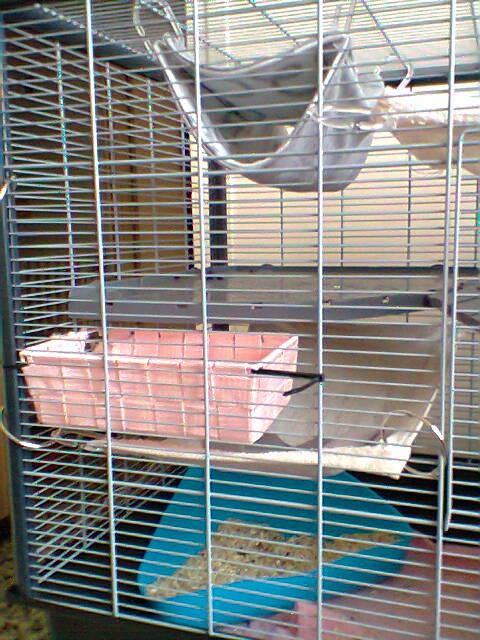 Photos de vos cages - Page 6 Photo016