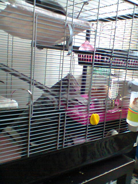 Photos de vos cages - Page 6 Photo017
