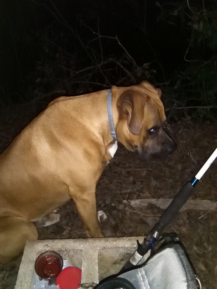 My farm dog/fishing buddy Ruger10