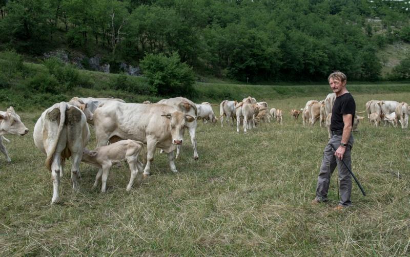 les blondes et le berger Dscf2010