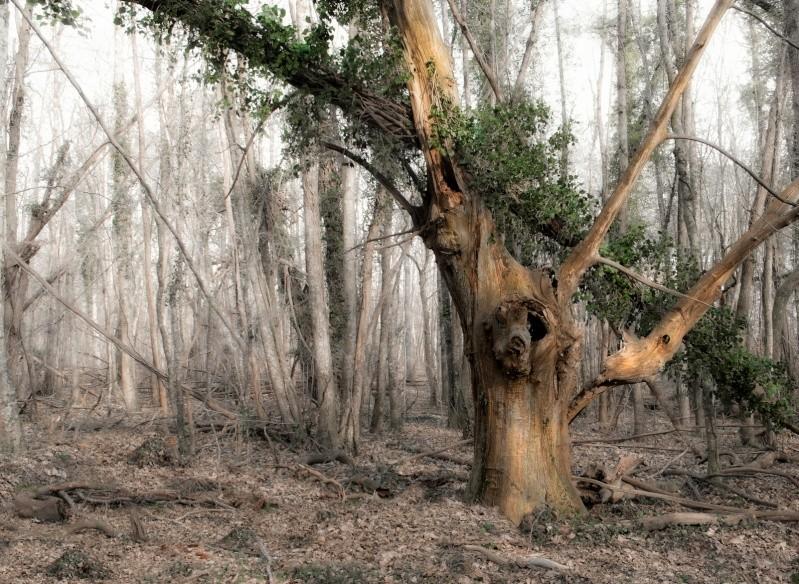 nature morte Nature10
