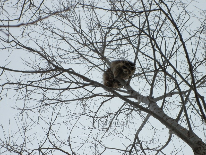 JAN-FEV les animaux et l'hiver : vos plus belles photos - Page 2 P1000322