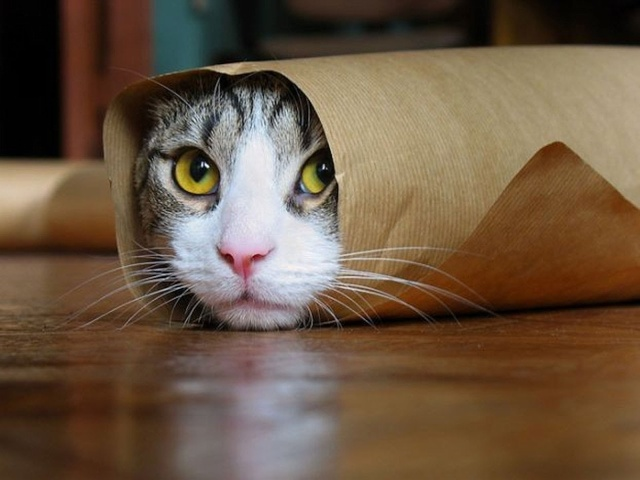 Photos de chats rigolos Maxres10