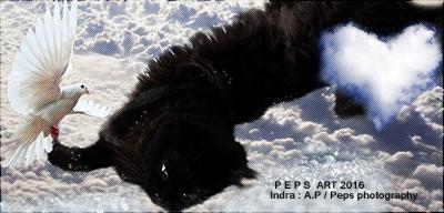 ⇝ Référencement de Amizanimaux Indisi10