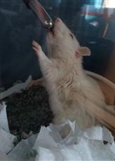 Petite ratte qui couine tout le temps ! - Page 2 Dc3dab11