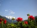 Location vacances vue sur la chaîne du Mont-blanc, 74170 Saint-Gervais-les-Bains (Haute-Savoie) 05910