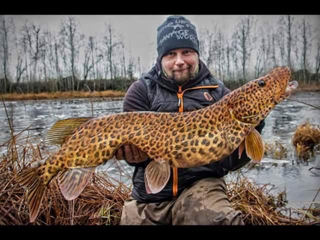 Brochet léopard et oui c est vrai Fb_img10