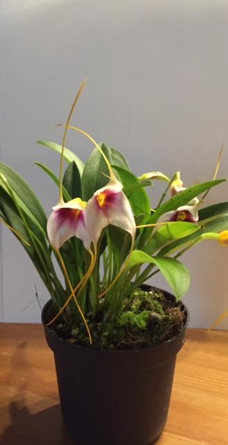 Orchidee - nur welche ;-) Orchid11