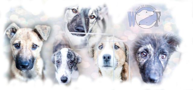Forum Association WOF : adopter un chien roumain Banniy17