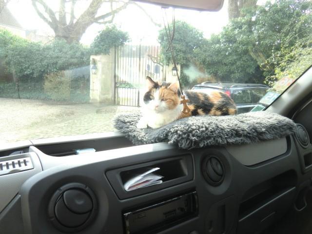 Vivre avec un......chat dans le camion! - Page 3 Cimg6314
