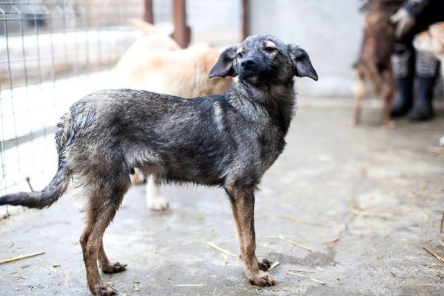 SNOOPY, né en 2015 - (Alina) - Adopté par Karen K. (Dpt 53) 10325410