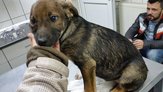 PAVEL, né en 2015 - (Alina) - Adopté via la SPA Sud Alpine 12508710