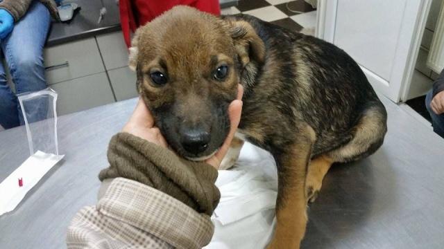 PAVEL, né en 2015 - (Alina) - Adopté via la SPA Sud Alpine 12523010