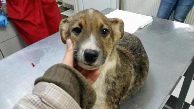 PAUL, né en 2015 - (Alina) - Adopté via la SPA Sud Alpine 12541010