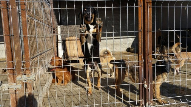 TEXO (ex Noël), né en 2015 - (Alina) - Adopté via la SPA Sud Alpine 12743710