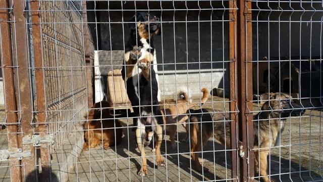 TEXO (ex Noël), né en 2015 - (Alina) - Adopté via la SPA Sud Alpine 7699_110