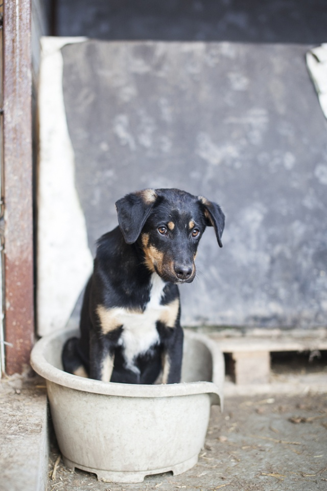 TEXO (ex Noël), né en 2015 - (Alina) - Adopté via la SPA Sud Alpine _mg_2911