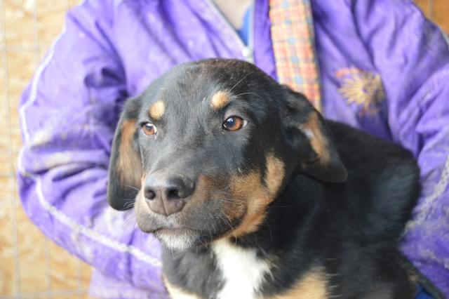 TEXO (ex Noël), né en 2015 - (Alina) - Adopté via la SPA Sud Alpine Dsc_0110
