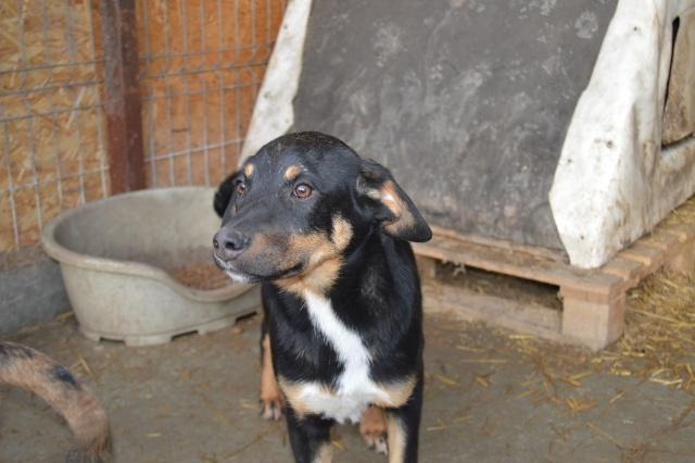 TEXO (ex Noël), né en 2015 - (Alina) - Adopté via la SPA Sud Alpine Dsc_0111