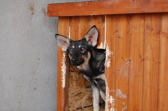 SHADY, née en 2015 - (Alina) - Adoptés via le refuge de Jouvence Shady110