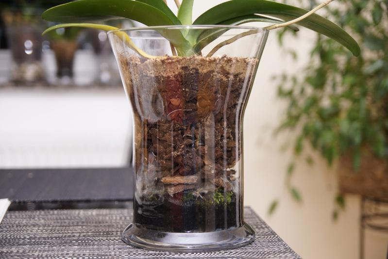 Orchideen in Glasvasen 4 (SGK) - Seite 25 _dsc8215