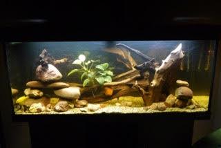 Aquarium 250L Aquari10