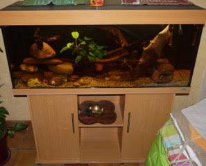 Aquarium 250L Aquati10