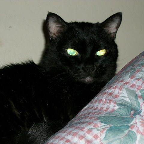 My Fur-baby, Duchess Myduch12